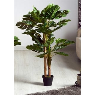 SPLIT PHILO 80CMS PLANT